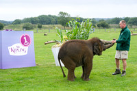 Sam the Baby Asian Elephant  559